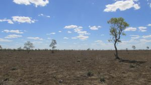 Drought-Tahna-paddock-2